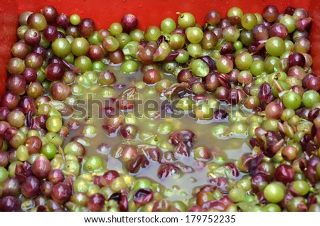 Bunch of squashed hand-picked ripe red wine grapes during wine making process.Wine concept - stock photo