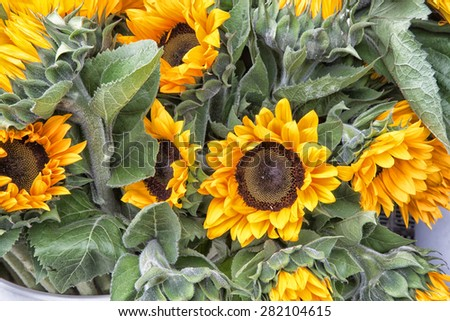 bunch of sunflowers at market - stock photo