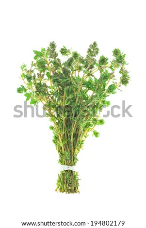 Bunch of Thyme Isolated on White Background - stock photo