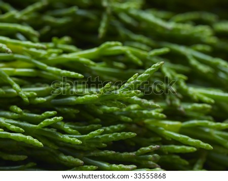 Bunch of uncooked samphire stalks - stock photo