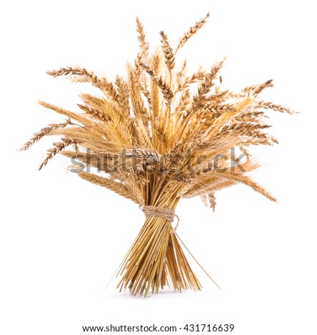 bunch of various types of grains isolated on white background