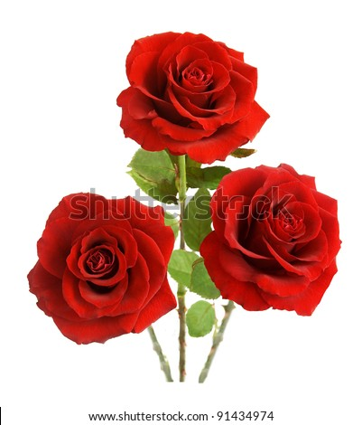 Bunch of velvet red roses isolated on white - stock photo
