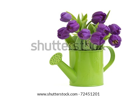 bunch of violet tulips - stock photo