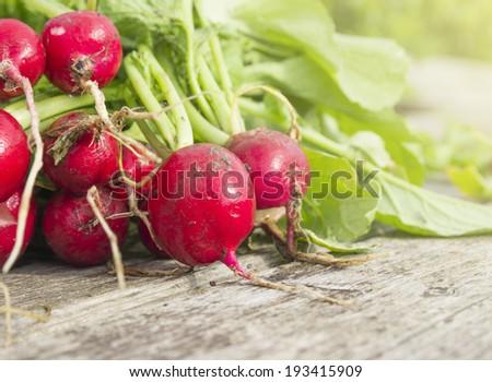 bunch of Wet fresh radishes, gardening - stock photo