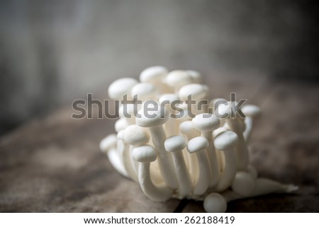 Bunch of white beech mushroom - stock photo