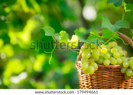 Bunch of white grapes in basket outdoors - stock photo