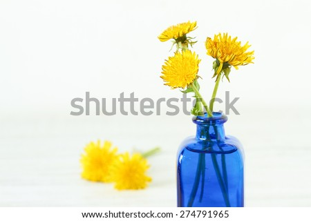 Bunch of yellow dandelions in blue vase on white vintage wooden table - stock photo
