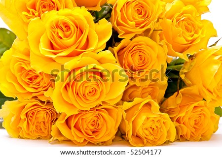 Bunch of yellow roses on white background - stock photo