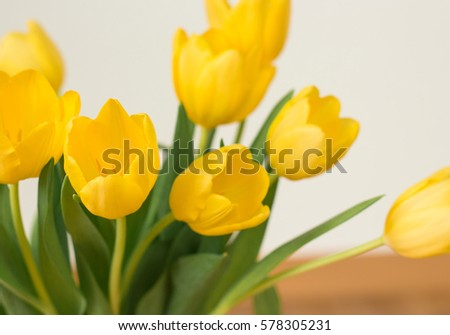 Bunch of yellow tulips on a white background.