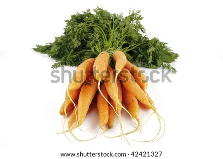 Bunch of young fresh carrots with green leafy tops on a reflective white background