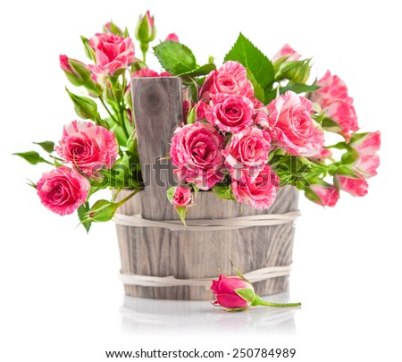 Bunch pink roses in wooden bucket. Isolated on white background - stock photo
