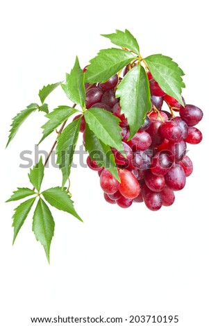 Bunch ripe, fresh red grapes with leaves isolated on a white background.