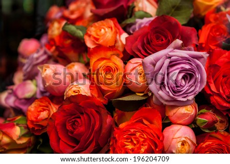 Bunches of colorful fresh roses in red, orange and lilac for sale at a flower seller, nursery or store in a romantic background symbolic of love - stock photo