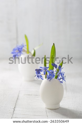 Bunches of  early spring   flowers ( Scilla siberica) in eggshells  on the white wooden plank. Shallow depth of field, focus on near flowers. Easter decor - stock photo
