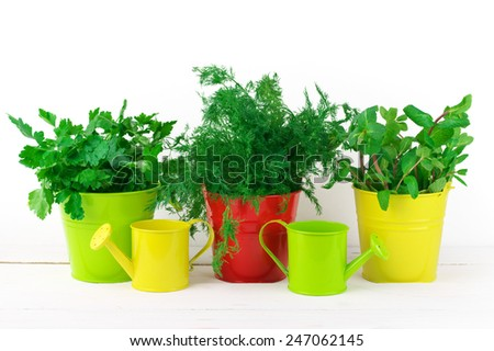 Bunches of flavoring greens in colorful metallic buckets and watering cans on white wood against white wall. - stock photo