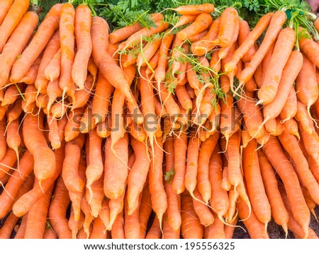 Bunches of fresh carrots for sale at local farmers market. - stock photo