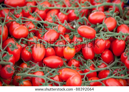 Bunches of fresh ripe red cherry tomatoes plum shape close-up - stock photo