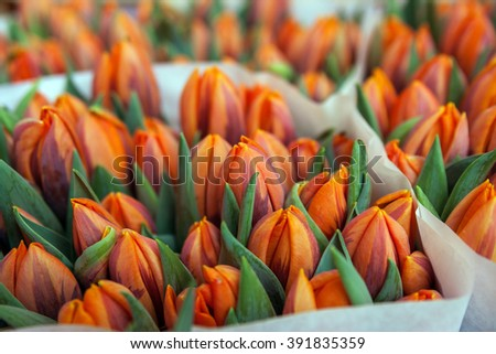 Bunches of Tulips for sale at the famous Bloemenmarket in Amsterdam - stock photo