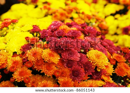 Bunches or Bouquets of orange, red, and yellow flowers - stock photo