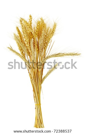 Bundle of different kind of cereal grains and grasses - stock photo