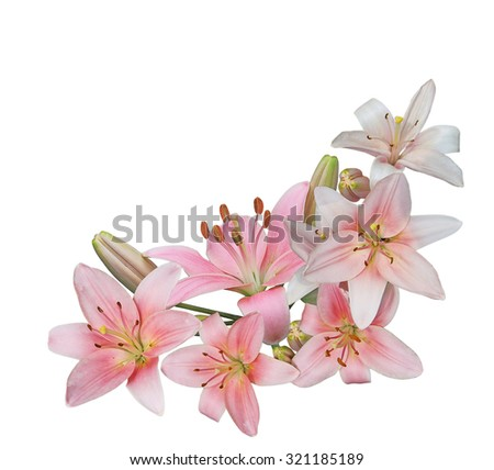 Bundle of fresh pink lily flower isolated on white background - stock photo