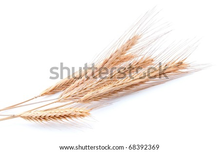 Bundle of golden wheat on white background - stock photo