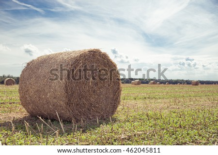 Bundle of hay on field.