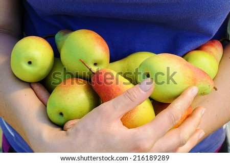 bundle of ripe pears in woman hands - stock photo