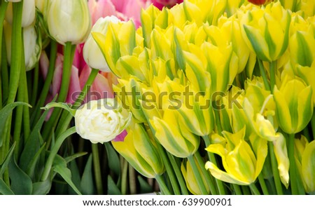 Bundles, buckets and bouquets of tulips, lilies,  irises and phloxes in Redmond farmer market