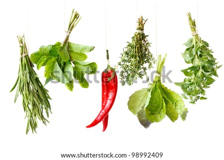 Bundles of fresh spices herbs handing over white background. - stock photo