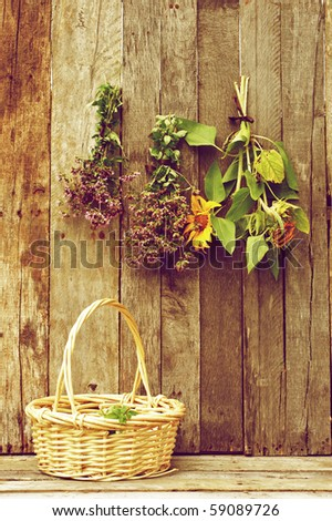 Bundles of herbs and sunflowers  hung to dry on a rustic barn board background with a basket for gathering. - stock photo