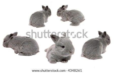 bunnies on a white background hopping everywhere - stock photo