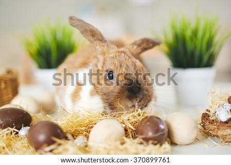 Bunny and chocolate eggs - stock photo