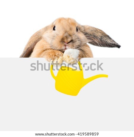 bunny holding a watering can and looking over a signboard. Isolated on white background - stock photo
