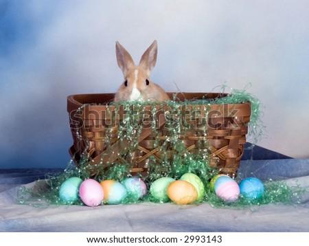 bunny in basket - stock photo