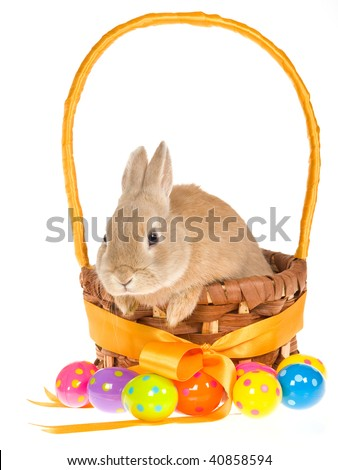 Bunny in Easter basket with colorful Easter eggs on white background - stock photo