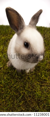 Bunny in grass - stock photo