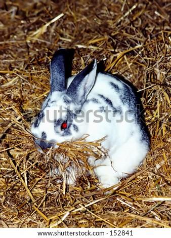 Bunny in hay - stock photo