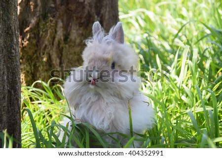 bunny lion head rabbit playing in green grass