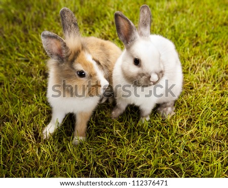 Bunny, rabbit and green grass - stock photo