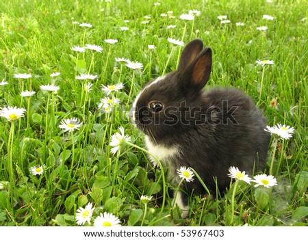 Bunny rabbit black and white - stock photo