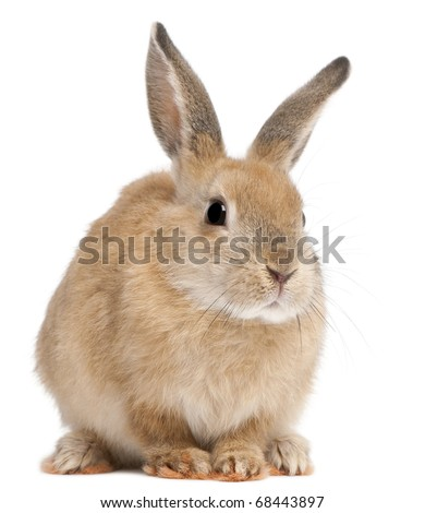 Bunny rabbit in front of white background - stock photo