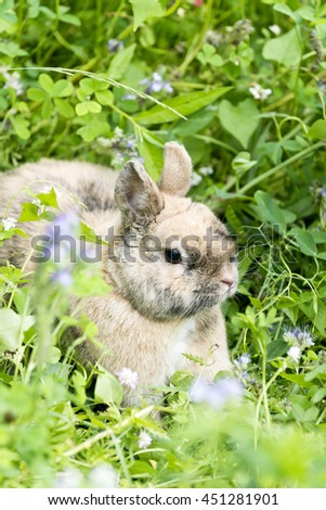 bunny sitting in a wild flower meadow
