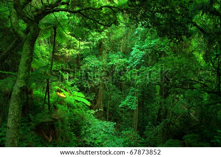 Bunya Mountains National Park, South East Queensland, Australia - stock photo