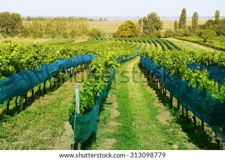 Burgenland, Austria - wine growing region by the Lake Neusiedl in National Park Neusiedler See-Seewinkel. UNESCO World Heritage Site. Filtered style colors. - stock photo