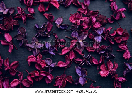 burgundy and purple dry flowers on a black slate board - stock photo