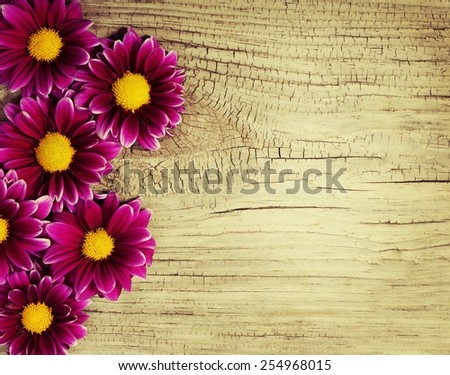 Burgundy Chrysanthemums Flowers on wooden background - stock photo