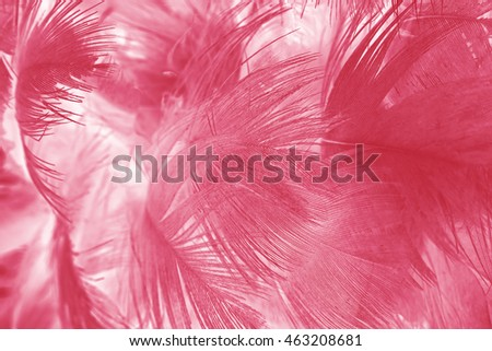 Burgundy red vintage color trends feather texture background