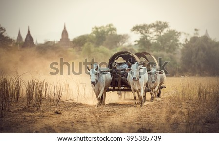Burmese rural man driving wooden cart with hay on dusty road drawn - stock photo