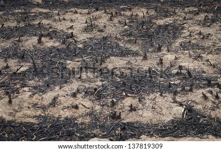 Burn forest ground - stock photo